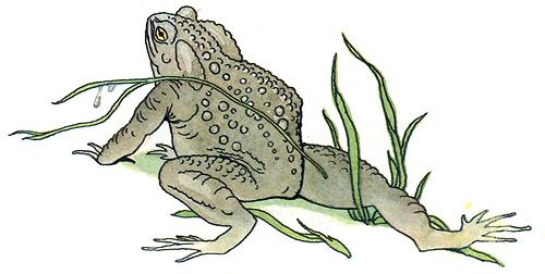 Раскраска сказки жаба и роза