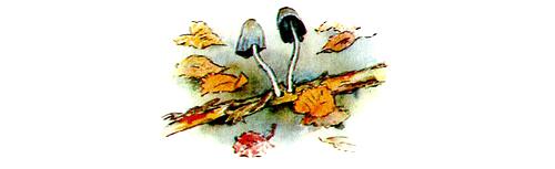 http://audioskazki.net/wp-content/gallery/bianki/sini4kin_kalendar/21_1.png