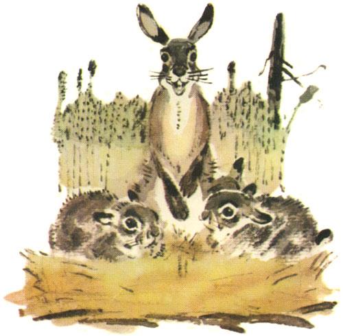 Картинки про храброго зайца длинные уши косые глаза короткий хвост