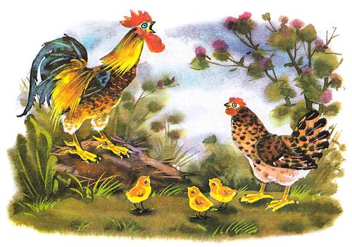 петушок и бобовое зернышко сказка в картинках